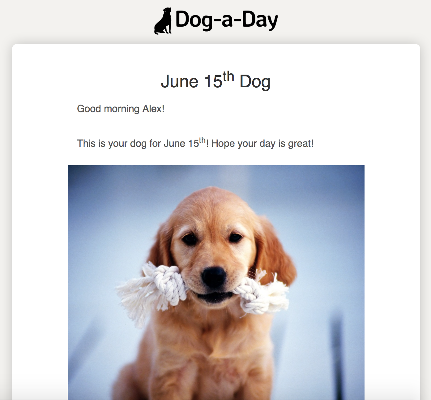 Dog-a-Day Email